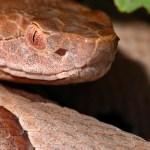 snake removal charlottesville va