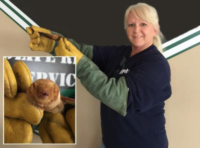 Wanda, a pro at THE Virginia Wildlife Pest Removal Control Leader.