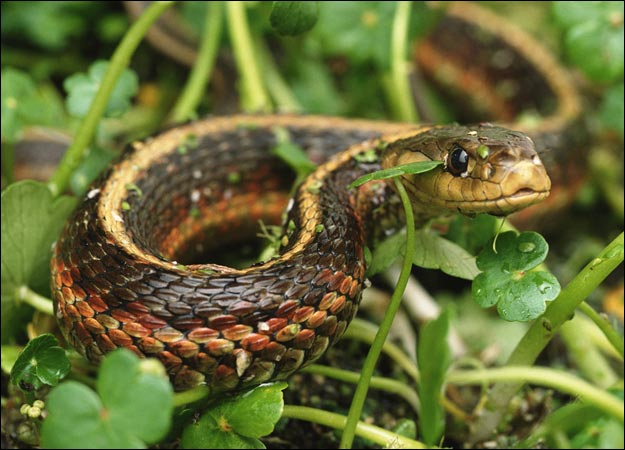 snake 1 The 10 Most Horrific Animals That Scare People