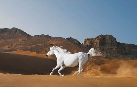 Amazing Animal 15 20 Amazing Animal Photography Shots