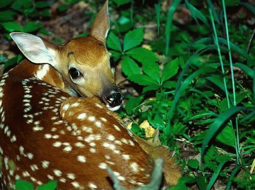 Amazing Animal 4 20 Amazing Animal Photography Shots