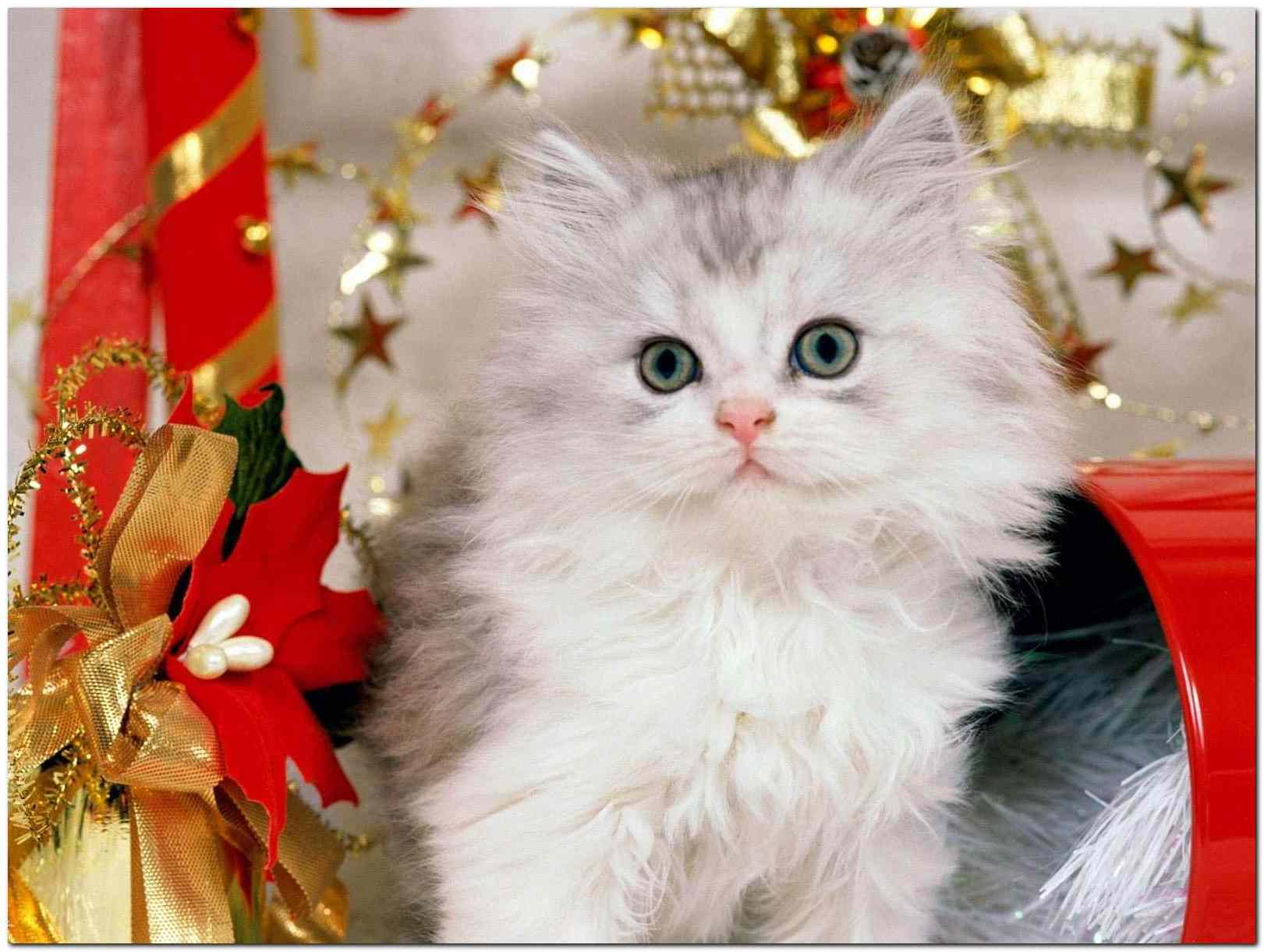 Merry Chrstimas To All The Animals 10 Merry Christmas To All The Animals