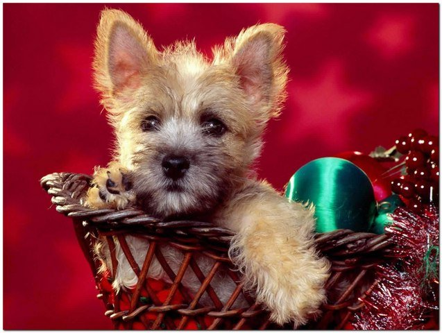Merry Chrstimas To All The Animals 15 Merry Christmas To All The Animals