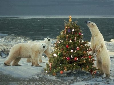 Merry Chrstimas To All The Animals 9 Merry Christmas To All The Animals