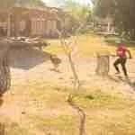 How BAWA beat the dog-cullers in one Bali banjar