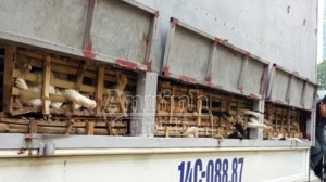 An Ninh Do newspaper photo of smugglers' truck.