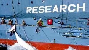 (Glenn Lockitch/Sea Shepherd Conservation Society photo)