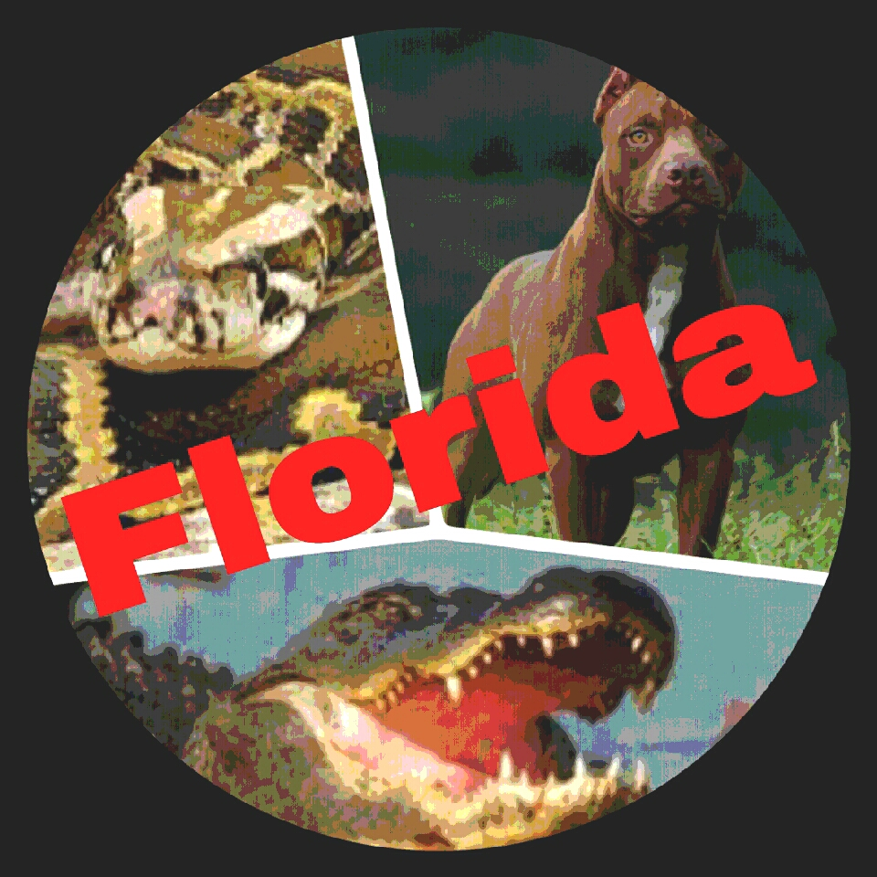 Who eats the most Floridians––pythons, pit bulls, bears, or