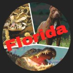 Who eats the most Floridians––pythons,  pit bulls,  bears,  or alligators?