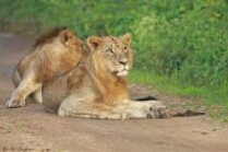 (Kenya Wildlife Service photo)