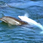 Protester wins damages from Taiji Whale Museum