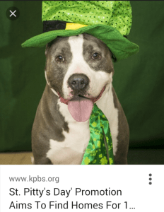 Is one test of suitability for adoption from the San Diego Humane Society & SPCA the dog's willingness to wear a silly hat?