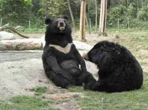 Jasper & Aussie. (Animals Asia Foundation photo)