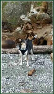 Bo the dog. (Beth Clifton photo)