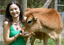 Lauren Ornelas with calf Nicholas at Animal Place sanctuary in northern California.