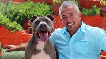 Cesar Millan (National Geographic TV photo)