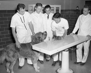 Texas A&M vet students circa 1960.