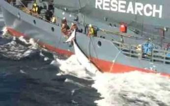 (Sea Shepherd Conservation Society photo)