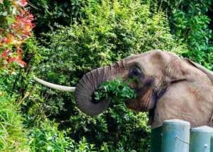 Watoto. (Woodland Park Zoo photo)