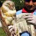 Makar Sankranti cuts birds out of the skies