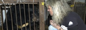 Jill Robinson visits a soon-to-be-freed bile farm bear.  (AAF photo)
