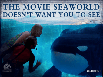 SeaWorld profits took a dive with the February 2013 debut of the documentary Blackfish.
