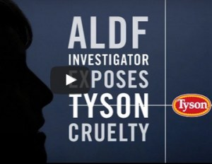 ALDF Tyson video