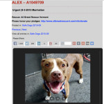 How behavior testing fails adopters,  dogs,  volunteers & shelter staff