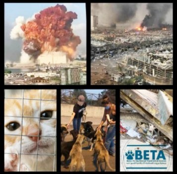Beirut for the Ethical Treatment of Animals