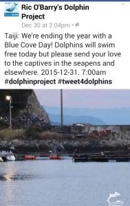 Blue Cove Day