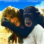 Ape learning experiments?  When will humans ever learn?
