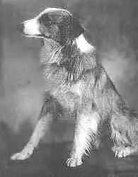 Bobbie_the_Wonder_Dog