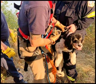 Buster the dog as he is rescued
