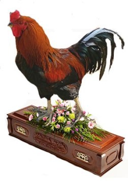 Cock on coffin