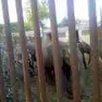 Zimbabwe defends export of elephants