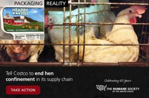 HSUS ad promoting investigation of Costco egg supplier Hillandale.