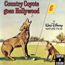 Country coyote