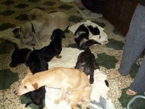 Overcrowding is a surefire prescription for disease spreading through a shelter.  (MC)