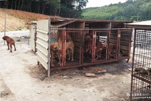 Another view of the Damyang Dog Farm. (Korea Animal Rights Advocates)