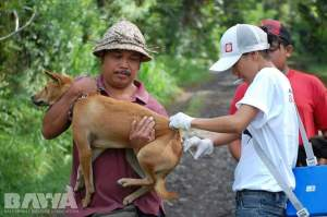 BAWA team vaccinates a dog. (BAWA photo)