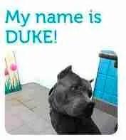 Duke of Albuquerque