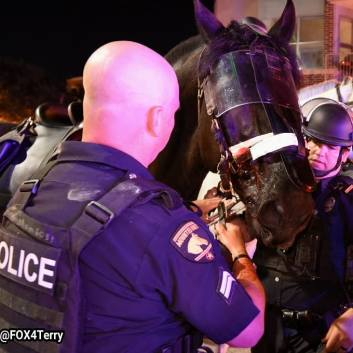 Injured Dallas police horse.