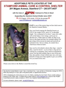 """This ad for a Stamford Animal Shelter dog,  posted by Outreach for Pets In Need,  appears to describe a dog-aggressive pit bull without mentioning that he is dog-aggressive.   He is merely said to be """"a bit selective about other dogs."""""""