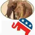 "Tweeting hunting is ""horror show,"" Trump pledges elephant verdict ""next week"""