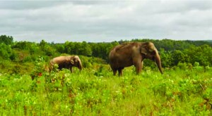 (Elephant Sanctuary in Tennessee photo)