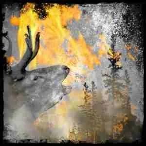 Elk in a wildlife refuge