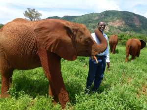 African Network for Animal Welfare founder Josphat Ngonyo with elephants in Kenya, where elephants are not legally hunted but elephant-watching is a staple of the tourism industry. (ANAW photo)