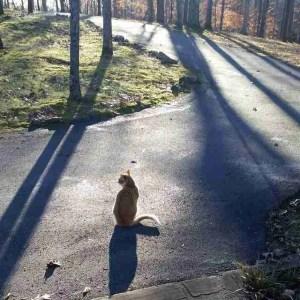 Left on the street (Faye McBride photo)