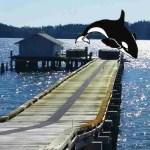 SeaWorld ends Shamu's sex life