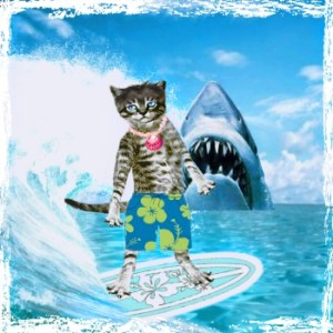 Feral cat on a surf board